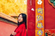 旅行|故宫延禧宫的网红银杏树终于黄啦