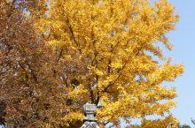 苏州天平山 | 用一场秋景,去迎接冬日