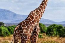 路小露的旅行~探秘肯尼亚~桑布鲁  不同寻常的桑布鲁|桑布鲁Samburu部落,因为艳丽的装束和优雅