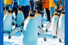 零距离看企鹅啦!