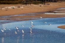北戴河观鸟圣地,带你回忆鸟儿迁移之旅~