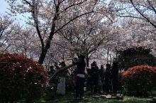 金匱公园樱花时