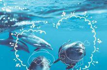 暑热难耐?送你几张超治愈的海底世界照片!