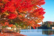 去年秋天去的 风景太美啦