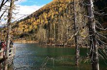 四姑娘措是由一条从雪山上流下来的河,这里河滩相对平坦,河中有许多枯萎的古树,都是千年古柏,虽然没有一
