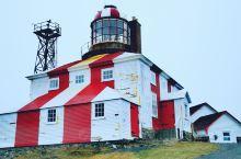 专程来纽芬兰,品尝加拿大硬壳龙虾