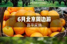 六月,北京郊区采摘忙 进入6月,水果一茬茬的上市了。 这几天北京街头的水果摊子,卖的都是黄杏。每年都
