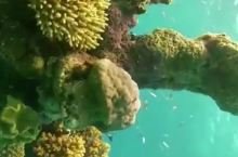 一定要去大堡礁