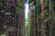 凯恩斯热带雨林自然公园坐落在库兰达山顶端,园内以第二次世界大战遗留下的军用战车作为游览车,给你独特的
