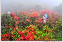 站在云端赏万亩杜鹃花海,漫步高山草原