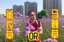 杭州闹市区出现一片花海