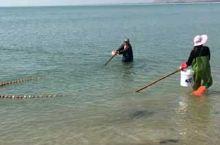 陸豐海灣、南海。 漁民正在淺海捕撈魚苗...