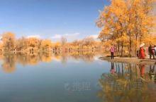 西北的秋天、金塔胡杨林