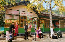 南雄帽子峰:南方最美的银杏大道
