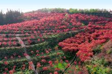 巴南的松木嘴,赏红叶