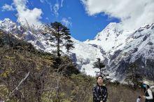 磨西镇海螺沟冰川森林公园,是贡嘎山冰山的一部分,这里的原始森林植被很好,冰川壮观。景区设置的非常好,