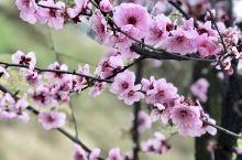 春天的美丽