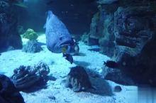 国庆亲子家庭旅行的不二选择关岛海底世界水族馆