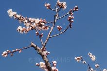 喜欢春天的花,生机盎然,满是朝气温柔的晚霞,懒散的猫所有的一切都是你喜欢的模样