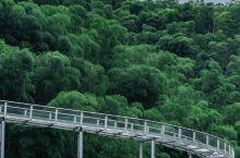安吉网红打卡|穿行绿色竹海的玻璃栈道漂亮