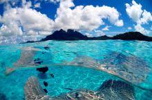 探索世界潜水圣地水下世界- 大溪地