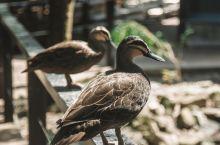 道格拉斯港野生动物栖息地。
