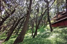 七曲山风景区柏树林