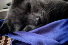 家里小猫卡哇伊呀 啦啦啦 啦啦啦 啦啦啦