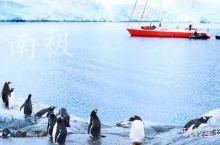 法国庞洛邮轮南极之旅(非华人包船)