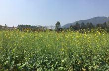 大片大片的油菜花~~还有金色的不知道名字的花花,让人很放松,蓝天白云下拍照非常漂亮