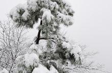 大雪中的乌鸦岭,以水墨画的形式展示别样的美