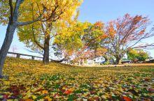 冈山后乐园的美丽秋光!