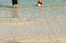 海边戏水的狗狗