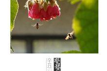 惊蛰,春雷响,万物生 两只小蜜蜂啊 飞在花丛中啊 鹭潮鼓浪屿美院