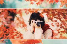 天桥沟国家森林公园的秋叶之旅