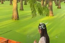 扬州 水上森林攻略