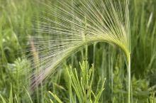 神奇的小草。