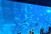 新加坡海洋馆,每个水族箱都那么美。