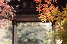 花港观鱼枫叶季