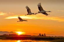 丹顶鹤的故乡--扎龙国家级自然保护区,这里是中国最大、世界闻名的扎龙湿地,位于黑龙江省齐齐哈尔市东南