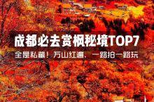 成都最美赏枫指南大公开!全是私藏小众秘境  进入11月之后,赏枫的黄金季节也来了!万里红遍,如灿烂晚