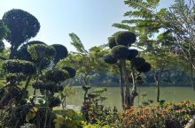 曼听公园位于景洪市区,可乘坐由告庄至泼水广场的景区直通车前往,原来是傣王的御花园。热带植物高低错落、