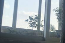 我爸妈过年来钟的花草,看着心情好好