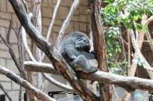 东山植物动物园