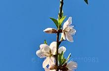 富川的花儿都开了