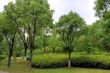 贡湖湾湿地公园的自然之声