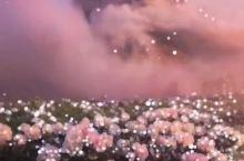 """""""可以再浪漫一些夜晚微风和鲜花."""""""