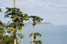 涠洲岛上看多彩火山岩
