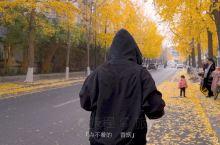 视城-成都 | 银杏花开的季节