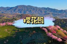 永福樱花园